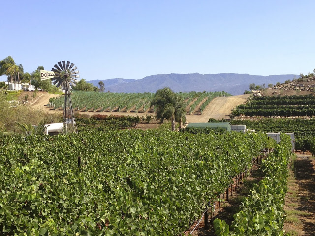 Vineyards of Doffo winery in Temecula