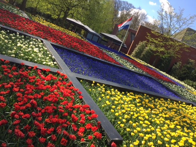 Keukenhof Gardens in the Netherlands is one of the top flower gardens in the world. Here are some tips on how to best navigate and enjoy these spectacular gardens and surrounding flower fields. Photo credit: Monique White Keukenhof | Tulips | Netherlands | Holland | Netherlands itinerary | Netherlands Travel Guide | Holland Travel Guide | Holland Itinerary | Things to do in Holland | Netherlands Travel Tips | Holland Travel Tips | Amsterdam Travel Tips Things to do in Amsterdam | Amsterdam | Europe travel planning | travel | travel tips