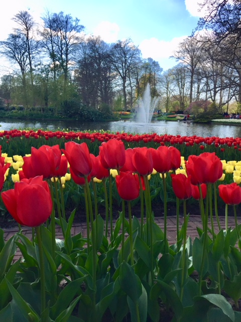 Keukenhof Gardens in the Netherlands is one of the top flower gardens in the world. Here are some tips on how to best navigate and enjoy these spectacular gardens and surrounding flower fields. Photo credit: Monique White