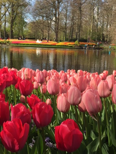 Tips for Visiting Keukenhof Gardens