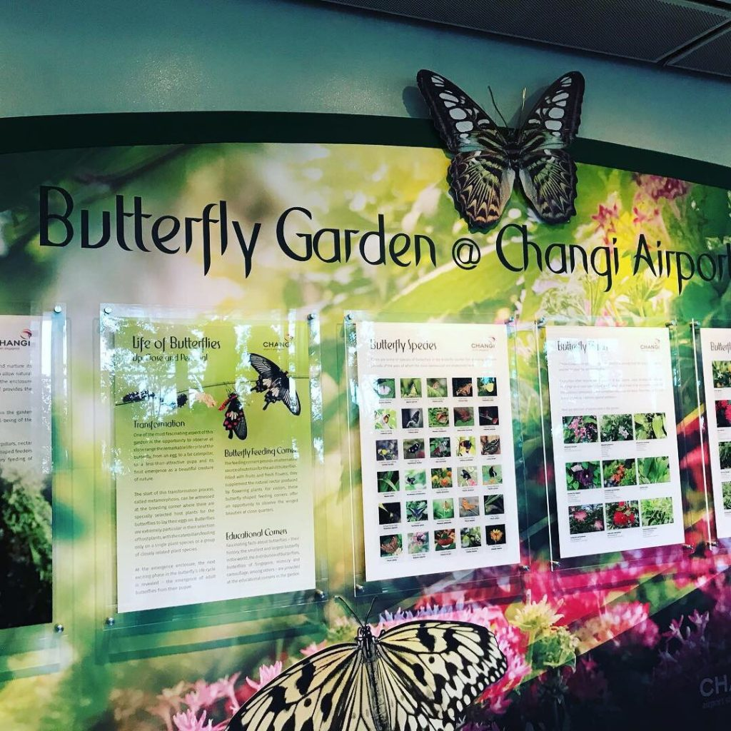 The Butterfly Garden in Terminal 3 of Changi International Airport is the world's first airport-based butterfly garden