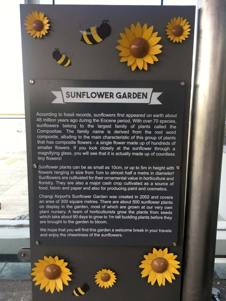 The Sunflower Garden is located on the rooftop of Terminal 2 of Changi International Airport.