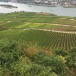 Wonderful Wine Regions Along the Rhine River