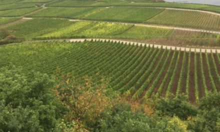 Wonderful Wine Regions Along the Rhine River