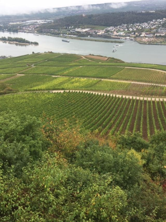 The Rhine River cruise passes romantic castles, picturesque villages, and the stunning sloping terraces vineyards that produce the region's signature wines. Photo credit: Monique White